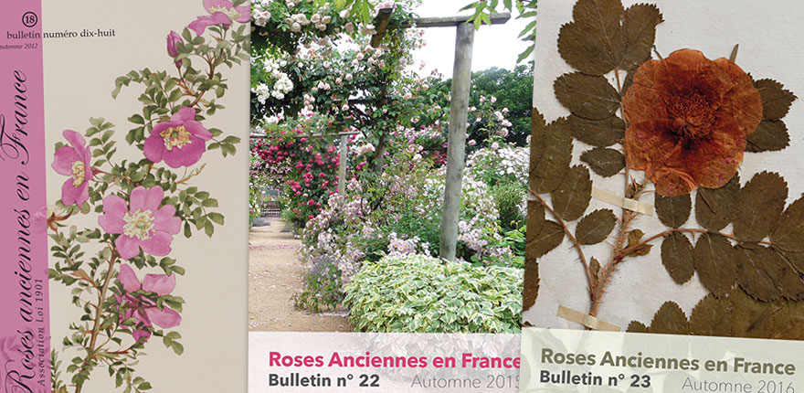 bulletin annuel de l'association Roses Anciennes en France